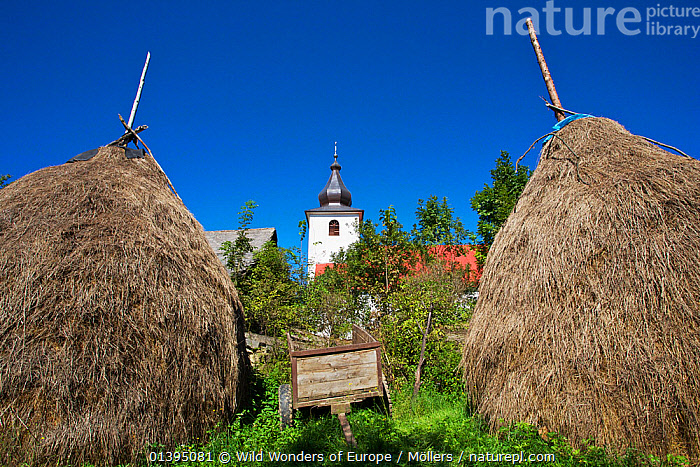 Two traditional hay stacks with the church of Nova Sedlica in the distance, Slovakia, September 2011, BUILDINGS,CHURCHES,EASTERN CARPATHIANS,EASTERN EUROPE,EUROPE,FARMING,FLORIAN MOLLERS,REWILDING,SLOVAKIA,TRADITIONAL,WWE, Wild Wonders of Europe / Möllers