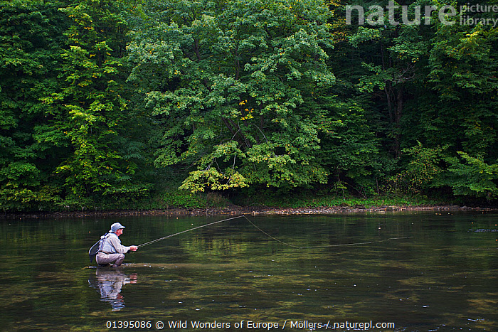 Man fishing for European grayling (Thymallus thymallus) in the San River, Myczkowce, Poland, September 2011 Model released  ,  EASTERN CARPATHIANS,EASTERN EUROPE,EUROPE,FISHING,FLORIAN MOLLERS,FLY FISHING,LEISURE,MAN,PEOPLE,POLAND,REFLECTIONS,REWILDING,RIVERS,WWE  ,  Wild Wonders of Europe / Möllers