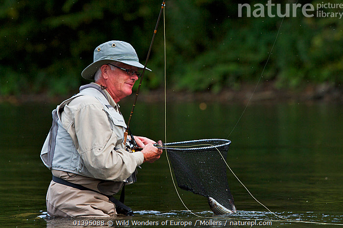 Man pulling in a European grayling (Thymallus thymallus) from the San River, Myczkowce, Poland, September 2011 Model released, EASTERN CARPATHIANS,EASTERN EUROPE,EUROPE,FISH,FISHING,FLORIAN MOLLERS,FLY FISHING,FRESHWATER,GRAYLING,LEISURE,MAN,OSTEICHTHYES,PEOPLE,POLAND,REWILDING,RIVERS,VERTEBRATES,WWE, Wild Wonders of Europe / Möllers