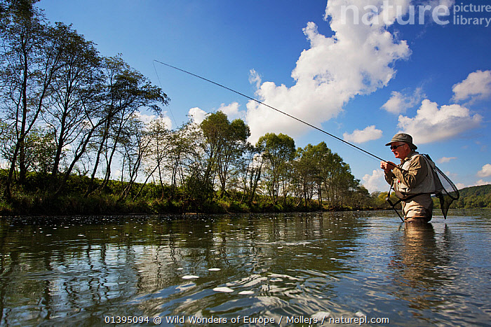 Man fly fishing for  European grayling (Thymallus thymallus) in the San River, Myczkowce, Poland, September 2011 Model released, EASTERN CARPATHIANS,EASTERN EUROPE,EUROPE,FISHING,FLORIAN MOLLERS,FRESHWATER,MAN,OUTDOOR PURSUITS,PEOPLE,POLAND,REWILDING,RIVERS,WWE, Wild Wonders of Europe / Möllers