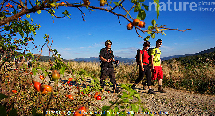 Two men and a woman hiking in the mountains, Bieszczady National Park, Ustrzyki Gorne, Poland, September 2011, model released  ,  EASTERN CARPATHIANS,EASTERN EUROPE,EUROPE,FLORIAN MOLLERS,HIKING,LEISURE,MAN,MOUNTAINS,NP,PEOPLE,POLAND,RESERVE,REWILDING,THREE,WALKING,WOMAN,WWE,National Park  ,  Wild Wonders of Europe / Möllers