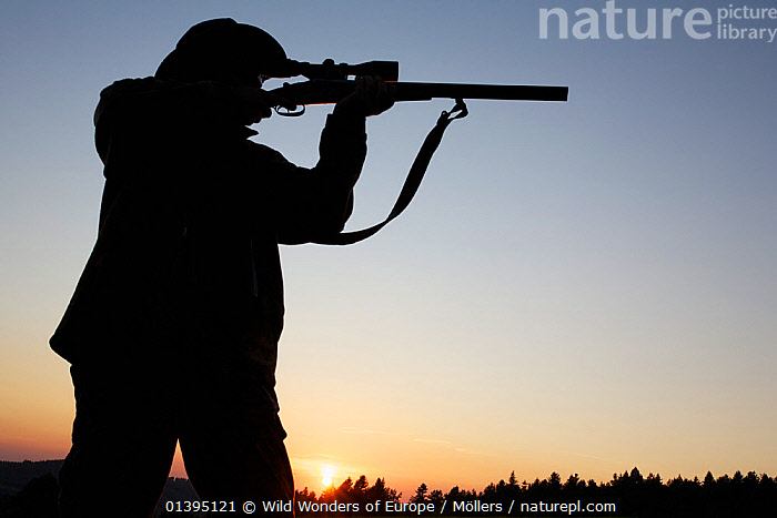 Hunter silhouetted with rifle at the ready, Leszczowate, Bieszczady region, Poland, September 2011 Model released  ,  EASTERN CARPATHIANS,EASTERN EUROPE,EUROPE,FLORIAN MOLLERS,GUNS,HUNTING,LOW ANGLE SHOT,PEOPLE,POLAND,REWILDING,SILHOUETTES,SUNSET,WWE  ,  Wild Wonders of Europe / Möllers