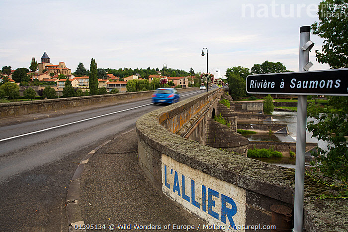 Old stone bridge crossing the river Allier, Pont-du-Chateau, Auvergne, France, August 2010  ,  BRIDGES,BUILDINGS,CARS,EUROPE,FLORIAN MOLLERS,FRANCE,LANDSCAPES,RIVERS,ROADS,SIGNS,TOWNS,URBAN,WWE  ,  Wild Wonders of Europe / Möllers
