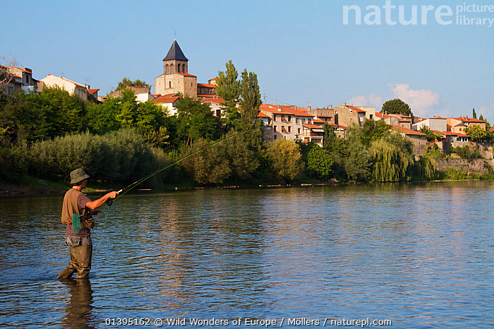 Man casting his fly out onto the river Allier, Pont-du-Chateau, France, August 2010, model released  ,  EUROPE,FISHING,FLORIAN MOLLERS,FLY FISHING,FRANCE,LANDSCAPES,MAN,OUTDOOR PURSUITS,PEOPLE,REFLECTIONS,RIVERS,TOWNS,WWE  ,  Wild Wonders of Europe / Möllers