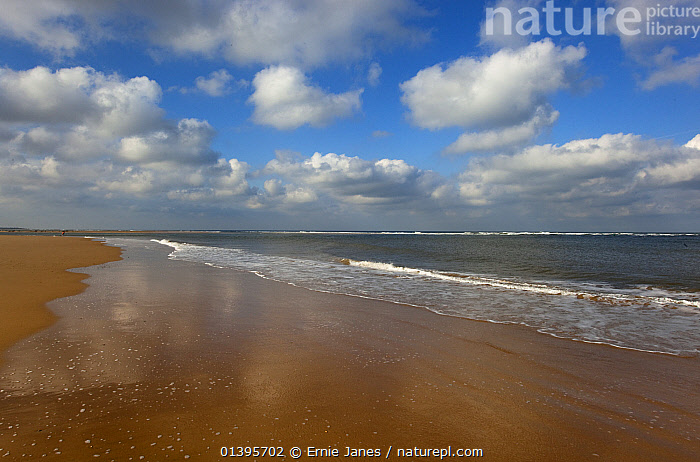 View of beach and sea at lowtide, Blakeney Point, Norfolk, UK, October.  ,  ANOB,BEACHES,CLOUDS,COASTS,ENGLAND,EUROPE,HORIZON,LANDSCAPES,REFLECTIONS,RESERVE,SEA,SKY,SUNNY,UK,WATER,WAVES,Weather,United Kingdom  ,  Ernie Janes