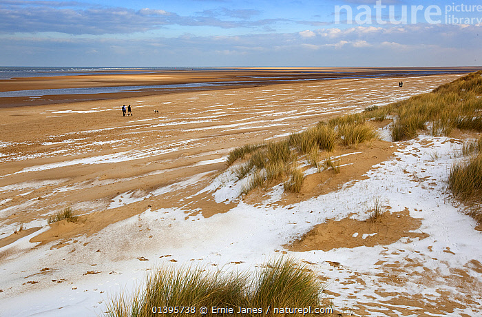 Holkham Beach in winter with dog walkers, Norfolk, UK, 2012.  ,  BEACHES,CANIDS,CARNIVORES,COASTS,DOGS,ENGLAND,EUROPE,EVENING,LANDSCAPES,LEISURE,MAMMALS,PEOPLE,PETS,RESERVE,SNOW,UK,WALKING,WINDY,WINTER,United Kingdom  ,  Ernie Janes