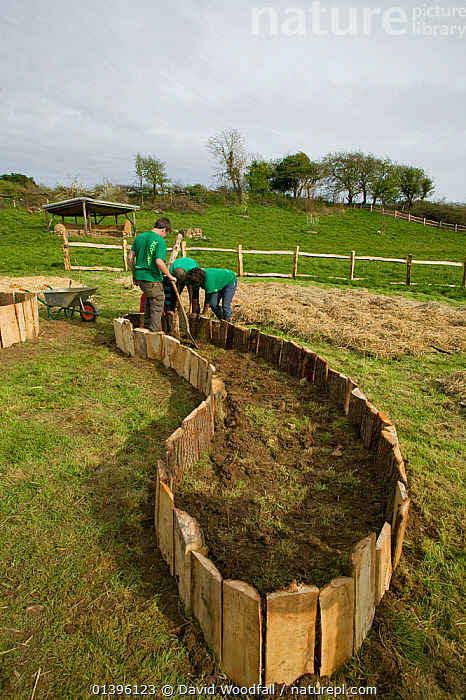 Young volunteers help create raised planting beds for growing food, Down to Earth environmental project, Murton, Gower, South Wales, UK 2009  ,  AGRICULTURE,BEDS,BUILDING,COMMUNITY,ENVIRONMENTAL,EUROPE,FOOD PRODUCTION,MAKING,PEOPLE,PROJECTS,SOUTH WALES,SUSTAINABLE,UK,VERTICAL,VOLUNTEERS,WALES,United Kingdom  ,  David Woodfall