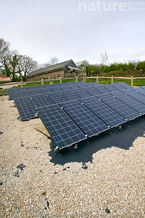 Solar panels in Down to Earth environmental project, way of creating sustainable energy, Murton, Gower, South Wales, UK 2009  ,  COMMUNITY,ELECTRICITY,ENERGY,ENVIRONMENTAL,EUROPE,GREEN,INNOVATIVE,MODERN,NEW,PANELS,SOLAR,SOUTH WALES,SUNLIGHT,UK,VERTICAL,WALES,United Kingdom  ,  David Woodfall