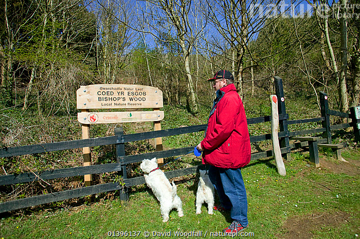 Visitor with dog looking at sign of Bishops Wood Local Nature Reserve, Murton, Swansea, Wales, UK 2009  ,  DOGS,DOMESTICATED,EUROPE,GREENSPACE,INFORMATION,MALES,MAMMALS,MAN,NOTICE,OUTDOORS,PEOPLE,PETS,RESERVE,SIGN,SOUTH WALES,UK,WALES,WALKING,United Kingdom  ,  David Woodfall