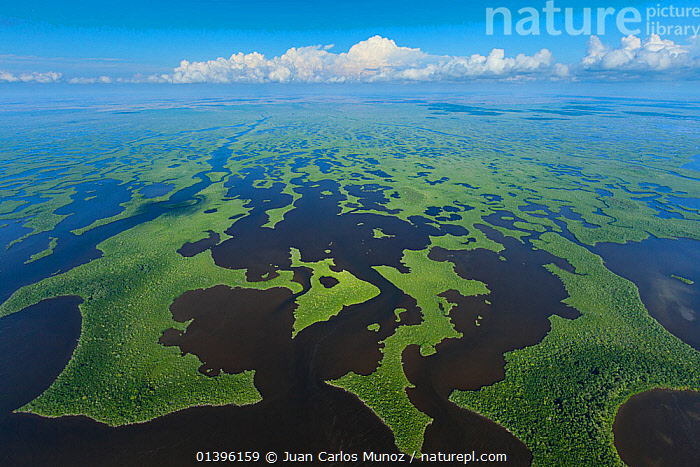 Aerial view of Everglades National Park, Florida, USA, February 2012  ,  AERIALS,BLUE,catalogue5,COASTS,distance,elevated view,Everglades,Everglades National Park,Florida,GREEN,horizon,LANDSCAPES,MANGROVES,national park,nature,Nobody,NP,outdoors,patterned,PATTERNS,Physical Geography,Scenic,Scenics,USA,WATER,WETLANDS,North America,,Immense,Vast,Space,Open Spaces,  ,  Juan Carlos Munoz