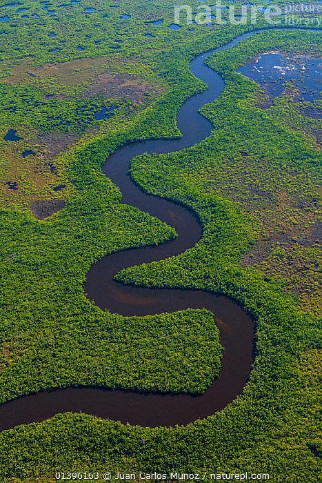 Aerial view of river flowing through Everglades National Park, Florida, USA, February 2012  ,  AERIALS,BLUE,GREEN,LANDSCAPES,MANGROVES,NP,RIVERS,USA,VERTICAL,WATER,WETLANDS,National Park,North America  ,  Juan Carlos Munoz