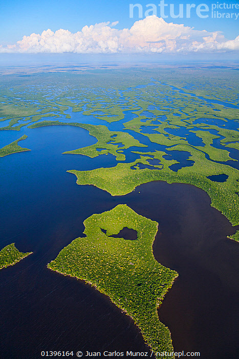 Aerial view of Everglades National Park, Florida, USA, February 2012  ,  aerial view,AERIALS,BLUE,catalogue5,COASTS,distance,elevated view,Everglades,Everglades National Park,Florida,GREEN,horizon,LANDSCAPES,MANGROVES,nature,Nobody,NP,outdoors,patterned,PATTERNS,Physical Geography,Scenic,USA,VERTICAL,WATER,National Park,North America  ,  Juan Carlos Munoz