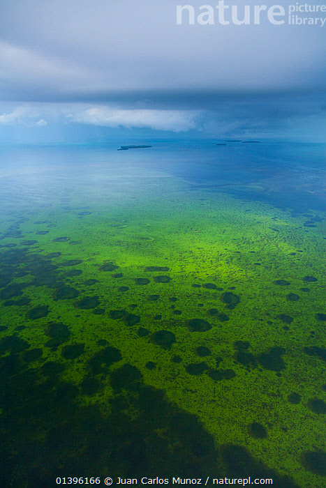 Aerial view of Everglades National Park, Florida, USA, February 2012  ,  AERIALS,COASTS,GREEN,LANDSCAPES,NP,SEA,USA,WATER,WETLANDS,National Park,North America  ,  Juan Carlos Munoz