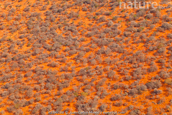 Aerial view of savanna land in the dry season, Rift Valley, Tanzania, August 2009  ,  ABSTRACT,AERIALS,AFRICA,ARTY SHOTS,EAST AFRICA,ORANGE,PATTERNS,PLANTS,SAVANNA,YELLOW,Grassland  ,  Juan Carlos Munoz