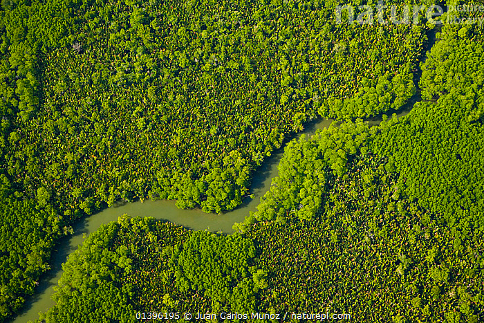 Aerial view of lowland rainforest and tributaries of the Kinabatangan River, Sabah, Borneo, Malaysia, April 2007  ,  AERIALS,ASIA,CANOPY,GREEN,MALAYSIA,RESERVE,RIVERS,SOUTH EAST ASIA,TROPICAL,TROPICAL RAINFOREST  ,  Juan Carlos Munoz