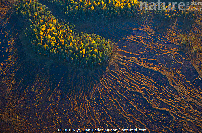 Aerial view of taiga forest and peat wetlands in autumn, Rovaniemi, Laponia, Finland, September 2007  ,  AERIALS,EUROPE,FINLAND,LANDSCAPES,PATTERNS,PEATLAND,PEATLANDS,SCANDINAVIA,TAIGA,TREES,TUNDRA,WETLANDS,WOODLANDS,PLANTS  ,  Juan Carlos Munoz