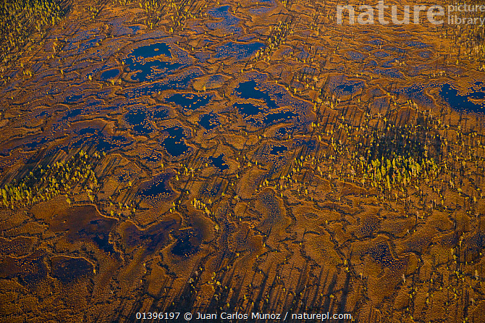 Aerial view of peat wetlands in autumn, Rovaniemi, Laponia, Finland, September 2007  ,  AERIALS,EUROPE,FINLAND,LANDSCAPES,PATTERNS,PEATLAND,PEATLANDS,SCANDINAVIA,TUNDRA,WETLANDS  ,  Juan Carlos Munoz