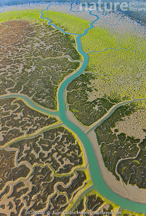 Aerial view river tributaries and saltmarshes of Bahia de Cadiz Natural Park, Huelva, Andalucia, Spain, March 2008  ,  ABSTRACT,AERIALS,COASTS,EUROPE,LANDSCAPES,MARSHES,PATTERNS,RESERVE,RIVERS,SALTMARSHES,SPAIN,WATER,Wetlands  ,  Juan Carlos Munoz