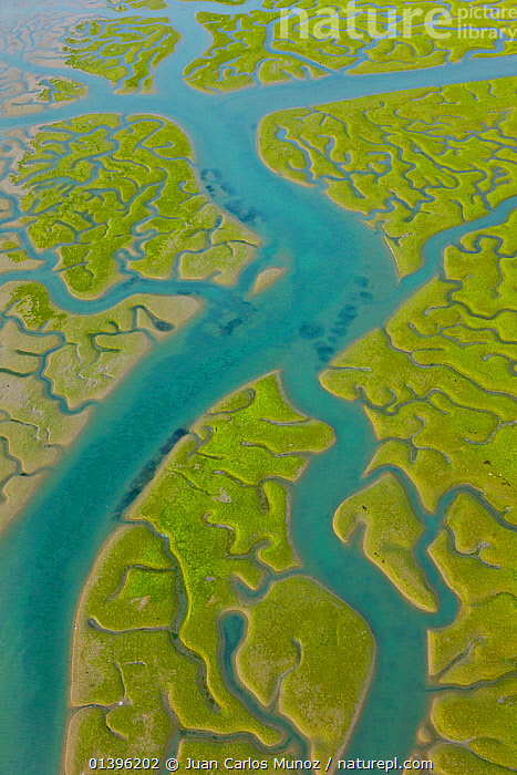 Aerial view of river tributaries and saltmarshes of Bahia de Cadiz Natural Park, Huelva, Andalucia, Spain, March 2008  ,  ABSTRACT,AERIALS,BLUE,EUROPE,GREEN,LANDSCAPES,MARSHES,PATTERNS,RESERVE,RIVERS,SALTMARSHES,SPAIN,VERTICAL,WATER,Wetlands  ,  Juan Carlos Munoz