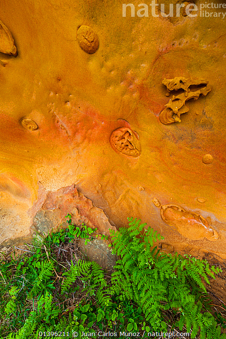 Geological rock formations in the sandstone cliffs of Jaizkibel Beach, Gipuzkoa, Basque Country, Spain, May 2012  ,  CLIFFS,CLOSE UPS,COASTS,EUROPE,GEOLOGY,HIGH ANGLE SHOT,ROCK FORMATIONS,SPAIN,VERTICAL  ,  Juan Carlos Munoz