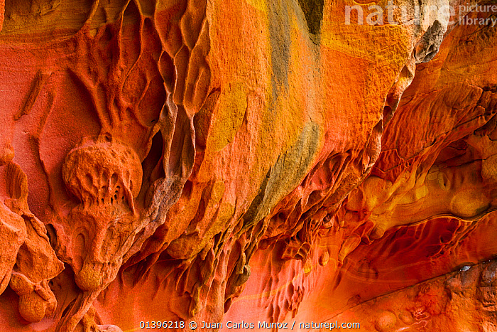 Detail of geological rock formations in the sandstone cliffs of Jaizkibel Beach, Gipuzkoa, Basque Country, Spain, May 2012  ,  CLIFFS,CLOSE UPS,COASTS,DETAILS,EUROPE,GEOLOGY,ORANGE,RED,ROCK FORMATIONS,SPAIN  ,  Juan Carlos Munoz