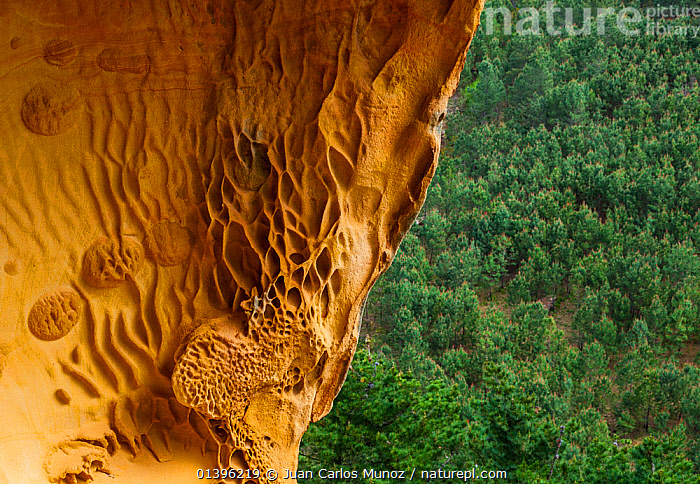 Detail of geological rock formations in the sandstone cliffs of Jaizkibel Beach, Gipuzkoa, Basque Country, Spain, May 2012  ,  CLIFFS,COASTS,EUROPE,GEOLOGY,PATTERNS,ROCK FORMATIONS,SPAIN  ,  Juan Carlos Munoz