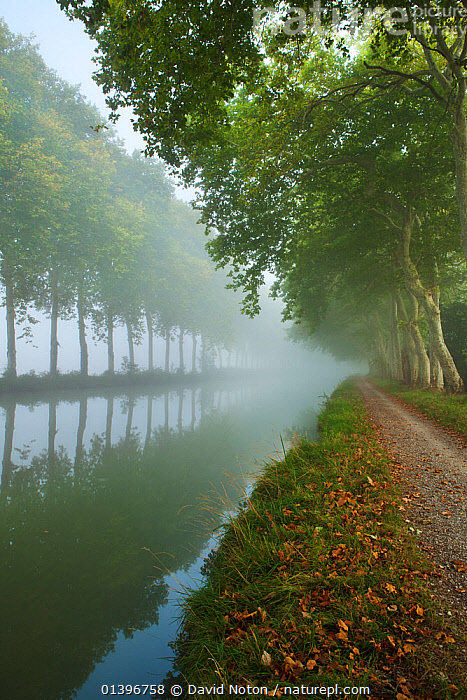 The Canal du Midi near Castelnaudary, Languedoc-Rousillon, France. September 2011., ATMOSPHERIC,AUTUMN,avenue,CALM,canal,Canal du Midi,CANALS,Canalside,Castelnaudary,catalogue5,DAWN,EUROPE,FRANCE,FRESHWATER,Languedoc Rousillon,MIST,misty,Morning,nature,Nobody,outdoors,paths,PEACEFUL,perspective,REFLECTIONS,Riverbank,Towpath,Travel,travel destination,treelined,TREES,VERTICAL,WATER,Waterway,PLANTS, David Noton