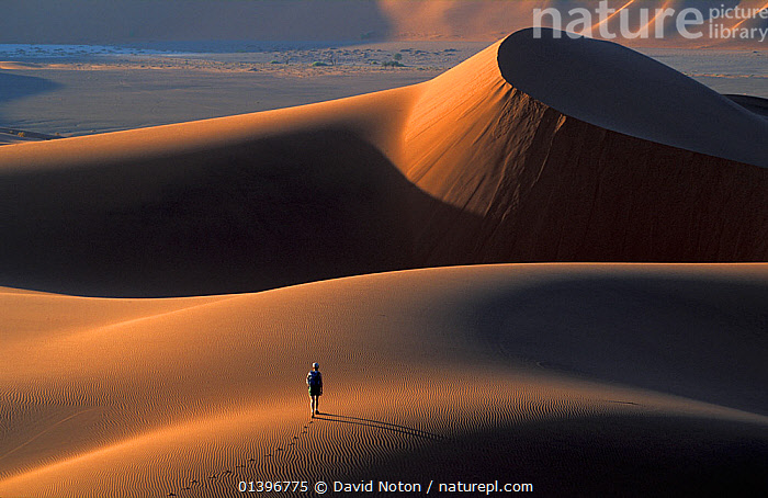 Person walking along sand dunes, Namib Desert, Namibia, Southern Africa. Model released.  ,  AFRICA,arid,barren,catalogue5,DESERTS,dunes,elevated view,EMPTY,footsteps,hiking,LANDSCAPES,namib desert,namibia,nature,one person,outdoors,PEOPLE,Physical Geography,remote,sand,sand dune,shadow,SIZE,solitary,solitude,SOUTHERN AFRICA,Travel,travel destination,WALKING  ,  David Noton