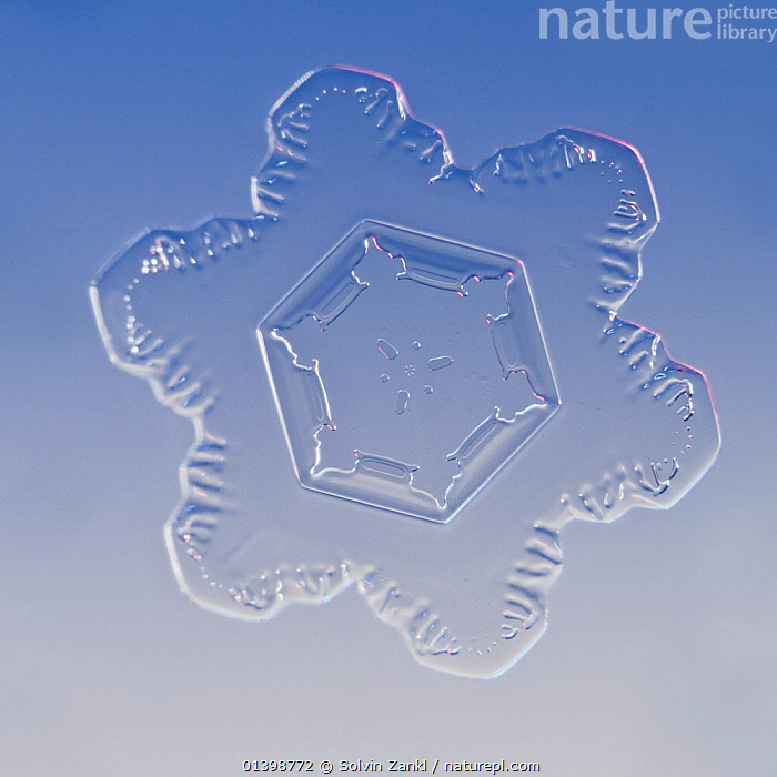 Snowflake magnified under microscope, Lilehammer, Norway, CRYSTALS,CUTOUT,FLAKES ,MICROSCOPIC,PATTERNS,SNOW,SNOWFLAKE,SNOWFLAKES,SYMMETRY,WEATHER,WINTER,Europe,Scandinavia, Solvin Zankl