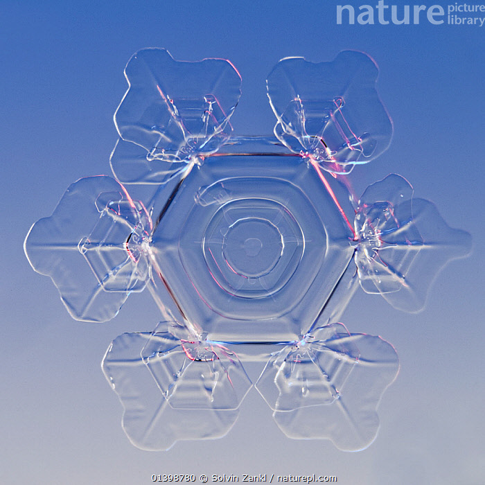 Snowflake magnified under microscope, Lilehammer, Norway, CRYSTALS,CUTOUT,FLAKES ,MICROSCOPIC,PATTERNS,SNOW,SNOWFLAKE,SNOWFLAKES,SYMMETRY,WEATHER,WINTER,Europe,Scandinavia,Catalogue5, Solvin Zankl