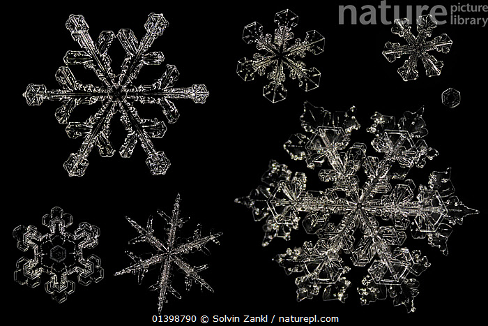 Different Snowflakes showing range in size and pattern, magnified under microscope, from Lilehammer, Norway. Digital composite  ,  CRYSTALS,CUTOUT,FLAKES ,MICROSCOPIC,PATTERNS,SNOW,SNOWFLAKE,SNOWFLAKES,SYMMETRY,WEATHER,WINTER,Catalogue5  ,  Solvin Zankl