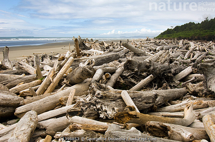 Driftwood washed up on beach at Olympic National Park, Washington, USA, June 2006  ,  BEACHES,COASTS,DRIFTWOOD,LANDSCAPES,MARINE,NATIONAL PARK,NORTH AMERICA,RESERVE,TIMBER,UNDERWATER,USA,WOOD  ,  Georgette Douwma