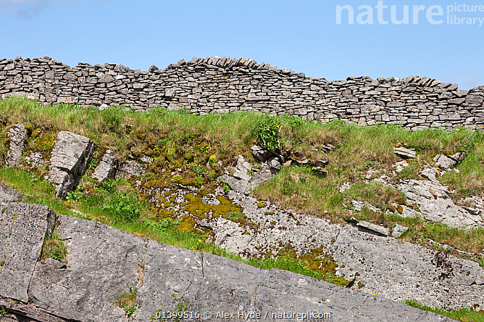 Limestone outcrop below a limestone dry stone wall. Peak District National Park, UK.  ,  DERBYSHIRE,ENGLAND,EUROPE,GEOLOGY,NP,RESERVE,ROCKS,TRADITIONAL,UK,National Park,United Kingdom  ,  Alex Hyde