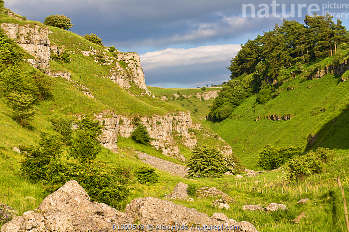Carboniferous limestone outcrops. Lathkill Dale National Nature Reserve, Peak District National Park, UK, June 2008., DERBYSHIRE,ENGLAND,EUROPE,LANDSCAPES,NP,RESERVE,UK,VALLEY,VALLEYS,National Park,United Kingdom, Alex Hyde