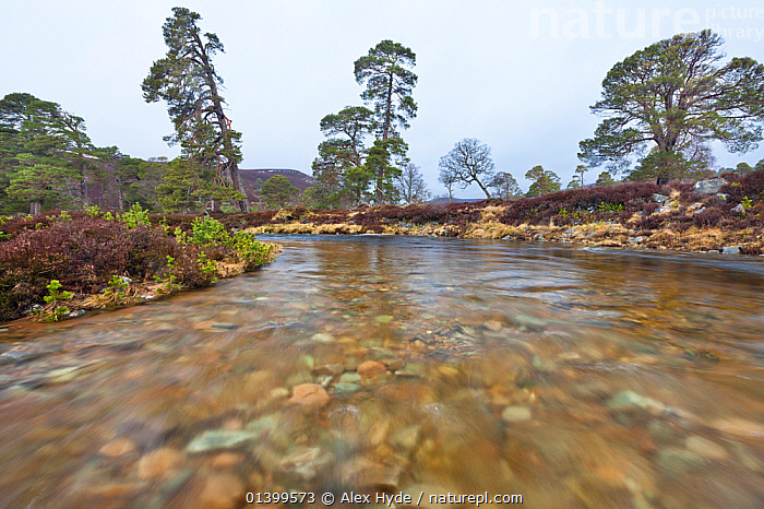 Wide angle view from middle of river (Lui Water). Braemar, Cairngorms National Park, Grampian Mountains, Scotland, UK, February 2012.  ,  EUROPE,HIGHLANDS,LANDSCAPES,MOTION BLUR,NP,RESERVE,RIVERS,SCOTLAND,STREAMS,UK,WIDE ANGLE,National Park,United Kingdom  ,  Alex Hyde