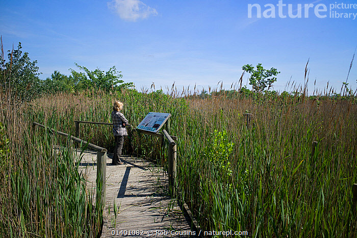 Woman looking at information panel on board walk on nature trail at La Capeliere in the Camargue Nature Reserve, France, Model Released, May 2012  ,  EUROPE,FRANCE,PEOPLE,RESERVE,SIGNS,TOURISM,WETLANDS,WOMAN  ,  Rob Cousins