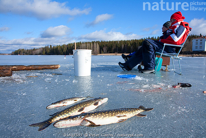 Ice fishing on a freshwater lake, Sweden, April 2008  ,  ANGLING,COLD,EUROPE,FISH,FISHING,FOOD,FROZEN,HUNTING,HUNTING FOOD,ICE,LAKES,LEISURE,MAN,PEOPLE,RECREATION,SCANDINAVIA,SUSTAINABLE,SWEDEN,TRADITIONAL,WATER,WINTER,SPORTS  ,  Peter Cairns