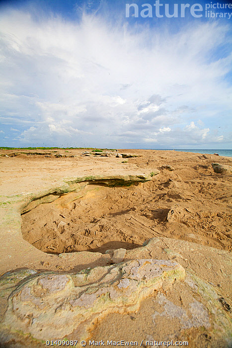 Exposed old coral wall on Raine Island, these exposed coral walls cause nesting turtles to get trapped and frequently die, Barrier Reef, Australia., AUSTRALASIA,AUSTRALIA,CLOUDS,CORALS,LANDSCAPES,NP,PACIFIC OCEAN,RESERVE,SKY,TROPICAL,VERTICAL,Weather,National Park, Mark MacEwen