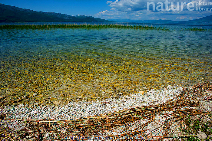Prespa Lake, Galicica National Park, Republic of Macedonia, May 2012.  ,  BALKANS,EUROPE,FRESHWATER,LAKES,LANDSCAPES,NP,RESERVE,National Park  ,  Bert Willaert