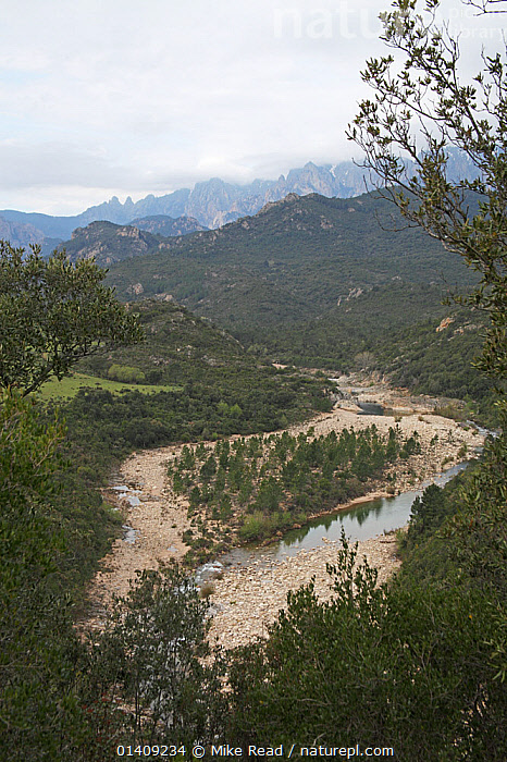View of the Solenzara river, Parc Naturel Regional de Corse, Corsica, France, April 2010., EUROPE,FRANCE,LANDSCAPES,MOUNTAINS,NP,RESERVE,RIVERS,VERTICAL,National Park, Mike Read