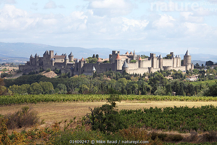 Medieval town of Carcassonne in the Aude department, southwest France, September 2010., ANCIENT,ARCHITECTURE,BUILDINGS,CASTLES,EUROPE,FARMLAND,FORTS,FRANCE,HISTORICAL,LANDSCAPES,MEDIEVAL,NP,RESERVE,TOWNS,National Park, Mike Read