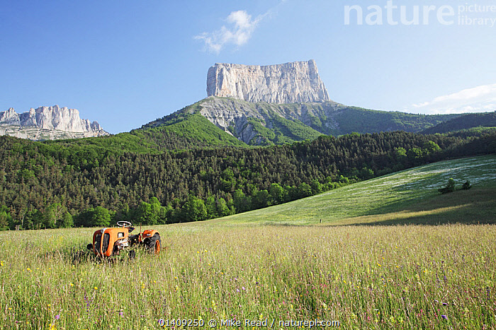 View of Mont Aiguille, with wildflower meadow and tractor in the foreground, Richardiere near Chichilianne, Parc Naturel Regional du Vercors, France, June 2012., EUROPE,FRANCE,LANDSCAPES,MACHINERY,MEADOWLAND,MOUNTAINS,NP,RESERVE,TRACTORS,VEHICLES,Grassland,National Park, Mike Read