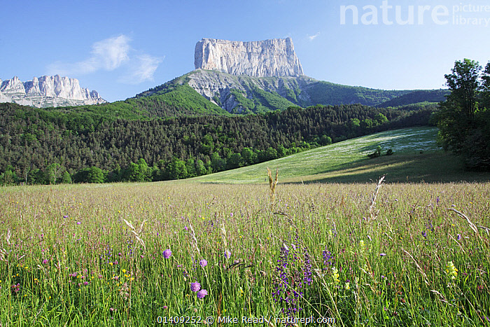 View of Mont Aiguille, with wildflower meadow in the foreground, Richardiere near Chichilianne, Parc Naturel Regional du Vercors, France, June 2012., EUROPE,FRANCE,LANDSCAPES,MEADOWLAND,MOUNTAINS,NP,RESERVE,Grassland,National Park, Mike Read