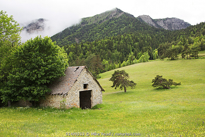 Wildflower meadow and mountain hut near the Col du Prayer, Parc Naturel Regional du Vercors, France, June 2012., BUILDINGS,CLOUDS,EUROPE,FRANCE,LANDSCAPES,MEADOWLAND,MOUNTAINS,NP,RESERVE,UPLANDS,Weather,Grassland,National Park, Mike Read