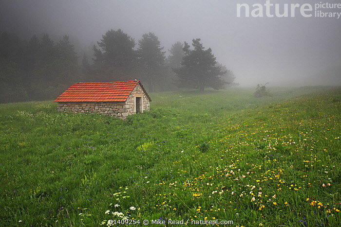 Mountain hut near the top of the Valley de Combeau, with wildflower meadow containing Bird's foot trefoil (Lotus corniculatus), Ox-eye daisy (Leucanthemum vulgare) and Mountain cornflower (Centaurea), Parc Naturel Regional du Vercors, France, June 2012., ASTERACEAE,BUILDINGS,CLOUDS,COMPOSITAE,DICOTYLEDONS,EUROPE,FABACEAE,FRANCE,LANDSCAPES,LEGUME,MARGUERITE,MEADOW,MEADOWS,MIST,MOUNTAINS,NP,PLANTS,RESERVE,TRADITIONAL,TREES,UPLANDS,WILDFLOWERS,Weather,National Park, Mike Read