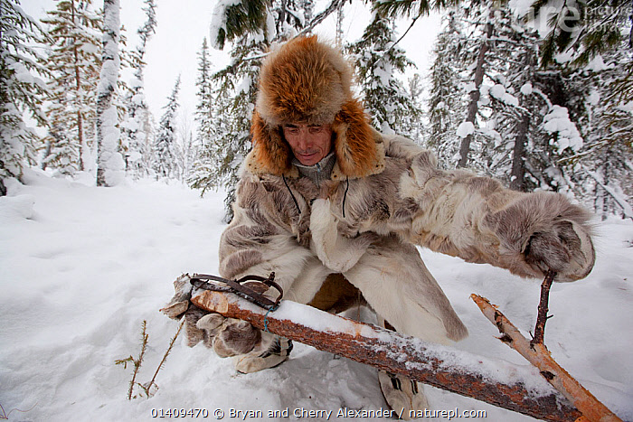 Kosta, a Selkup hunter, setting a trap to catch sable in the forest in winter. Krasnoselkup, Yamal, Western Siberia. Russia 2012, ARCTIC,ASIA,CIS,CLOTHING,CULTURES,FORESTS,FUR,HUNTING,INDIGENOUS,MALES,MAMMALS,MAN,NATIVE,PEOPLE,RUSSIA,SELKUP,SIBERIA,SNOW,TAIGA,TRADITIONAL,TRAPPING,TRAPS,TRIBAL,TRIBES,WESTERN SIBERIA,WINTER, Bryan and Cherry Alexander