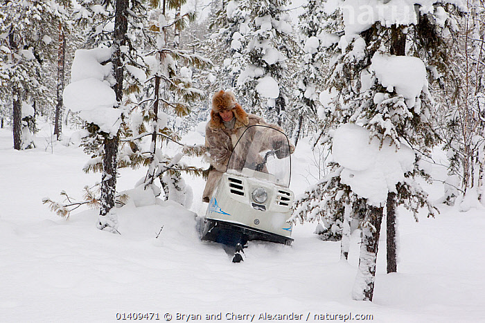 Kosta, a Selkup hunter, driving a snowmobile to check his sable traps in the forest. Krasnoselkup, Yamal, Western Siberia, Russia 2012, ARCTIC,ASIA,BOREAL,CIS,CULTURES,FORESTS,HUNTING,INDIGENOUS,MALES,MAN,NATIVE,PEOPLE,RUSSIA,SELKUP,SIBERIA,SKIDOO,SNOW,SNOWMOBILE,TAIGA,TRADITIONAL,TRANSPORT,TRAPPING,TREES,TRIBAL,TRIBES,VEHICLES,WESTERN SIBERIA,WINTER,PLANTS, Bryan and Cherry Alexander
