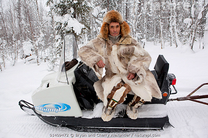 Kosta, a Selkup hunter, rests on his snowmobile while out checking his sable traps in the forest. Krasnoselkup, Yamal, Western Siberia, Russia 2012, ARCTIC,ASIA,BOREAL,CIS,CLOTHING,CULTURES,FORESTS,FUR,HUNTING,INDIGENOUS,MALES,MAN,NATIVE,PEOPLE,RUSSIA,SCOOTER,SELKUP,SIBERIA,SKIDOO,SNOW,SNOWMOBILE,TAIGA,TRADITIONAL,TRANSPORT,TRAPPING,TRIBAL,TRIBES,VEHICLES,WESTERN SIBERIA, Bryan and Cherry Alexander