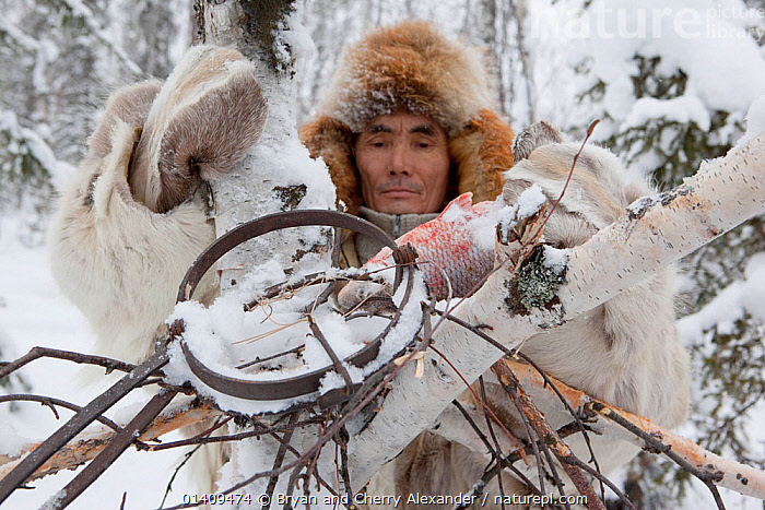 Kosta, a Selkup hunter, baiting a trap with fish to catch sable in the forest in winter. Krasnoselkup, Yamal, Western Siberia. Russia 2012, ARCTIC,ASIA,BAITING,BOREAL,CIS,CULTURES,FISH,HUNTING,INDIGENOUS,MALES,MAN,NATIVE,PEOPLE,RUSSIA,SELKUP,SIBERIA,TAIGA,TRADITIONAL,TRAPPING,TRAPS,TRIBAL,TRIBES,WESTERN SIBERIA,WINTER ,Tribes,, Bryan and Cherry Alexander