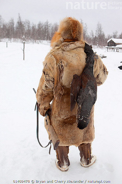 Kosta, a Selkup man, returns to a winter camp after hunting Capercaille, Krasnoselkup, Yamal, Western Siberia, Russia 2012, ARCTIC,ASIA,BIRDS,CAPERCAILLE,CARCASS,CIS,CLOTHING,CULTURES,DEAD,FOOD,FUR,GUNS,HUNTING,INDIGENOUS,MAN,NATIVE,PEOPLE,REAR,RUSSIA,SELKUP,SIBERIA,SNOW,TRADITIONAL,TRIBAL,TRIBES,VERTICAL,WESTERN SIBERIA,WINTER, Bryan and Cherry Alexander